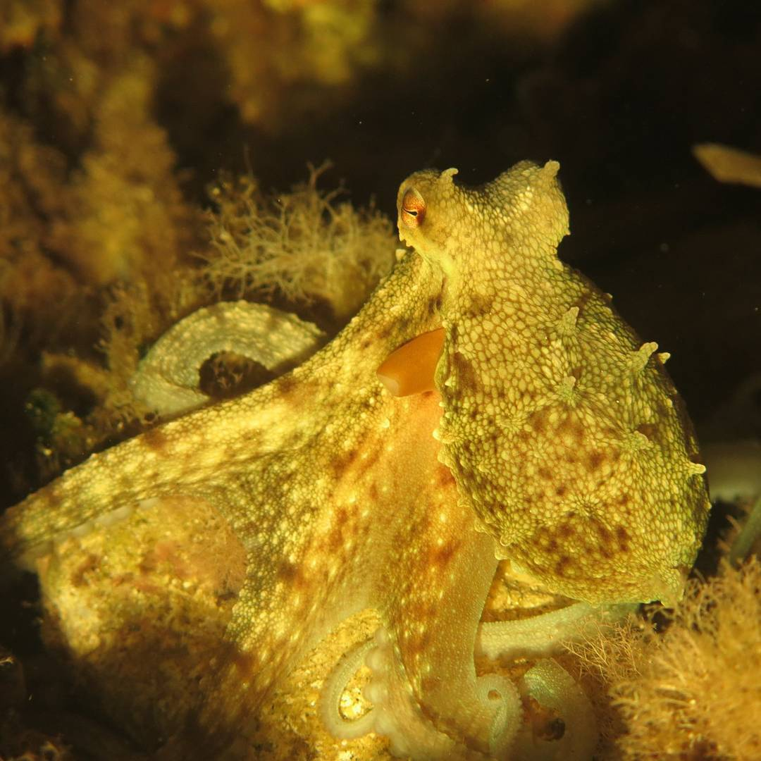Oktopus am Plage de Pampelonne