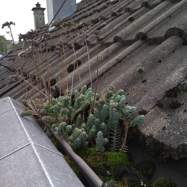 Bewuchs auf dem Dach